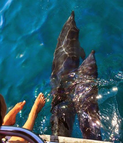 auf Tuchfühlung mit den Delfinen