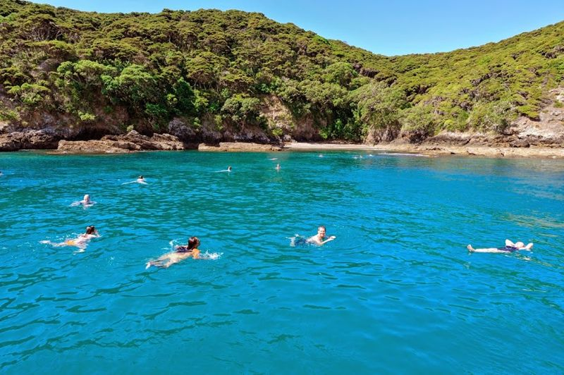 Schwimmen in der Bay of Islands