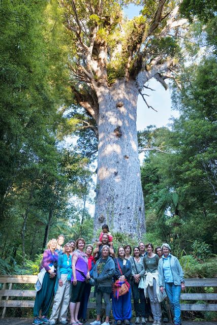"zu Tane Mahuta, dem ""Herrn des Waldes"" - größter Baum Neuseelands"