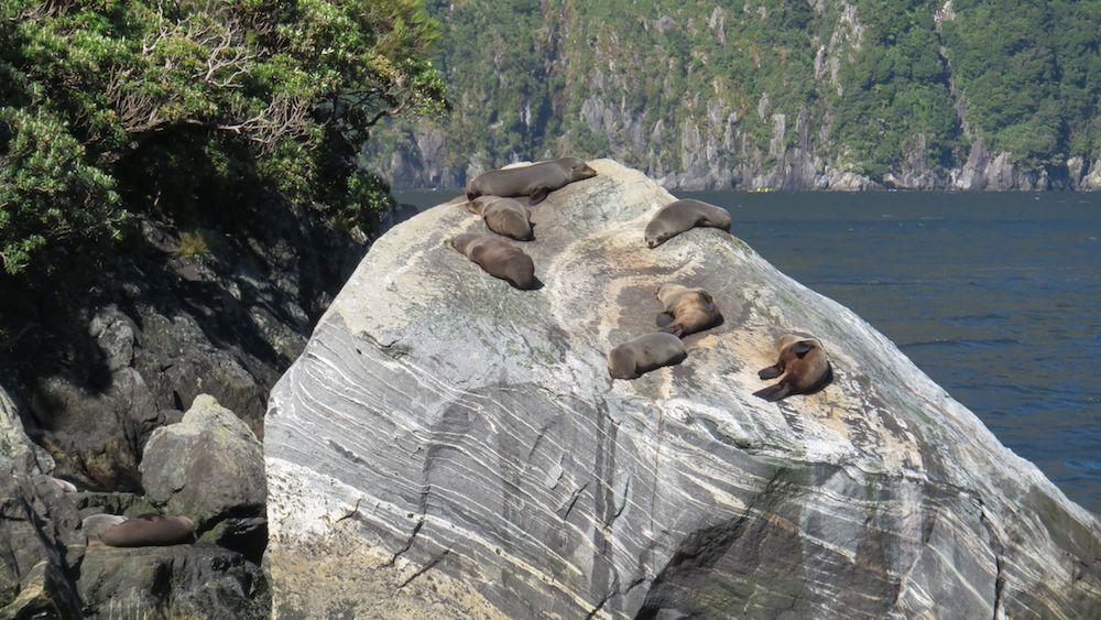 Robben beim Rasten