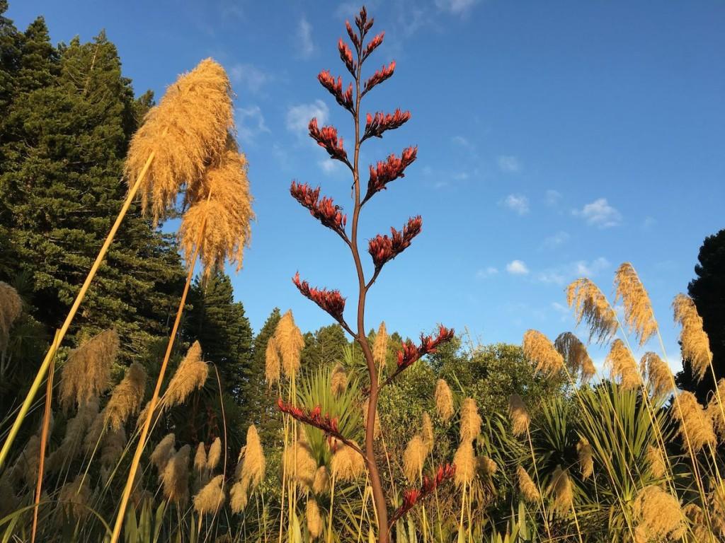 Typische Pflanzen: Neuseeland Flachs und Schilf