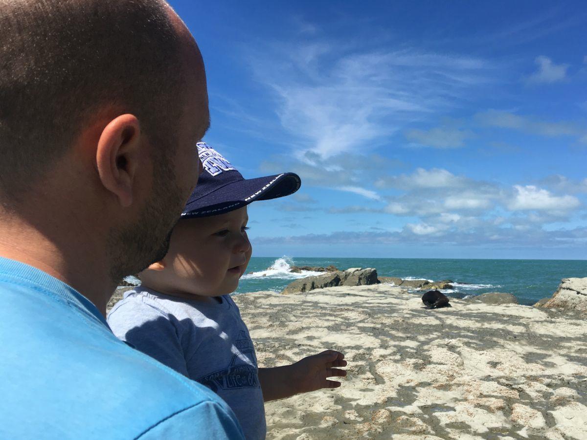 Robben schauen in Kaikoura
