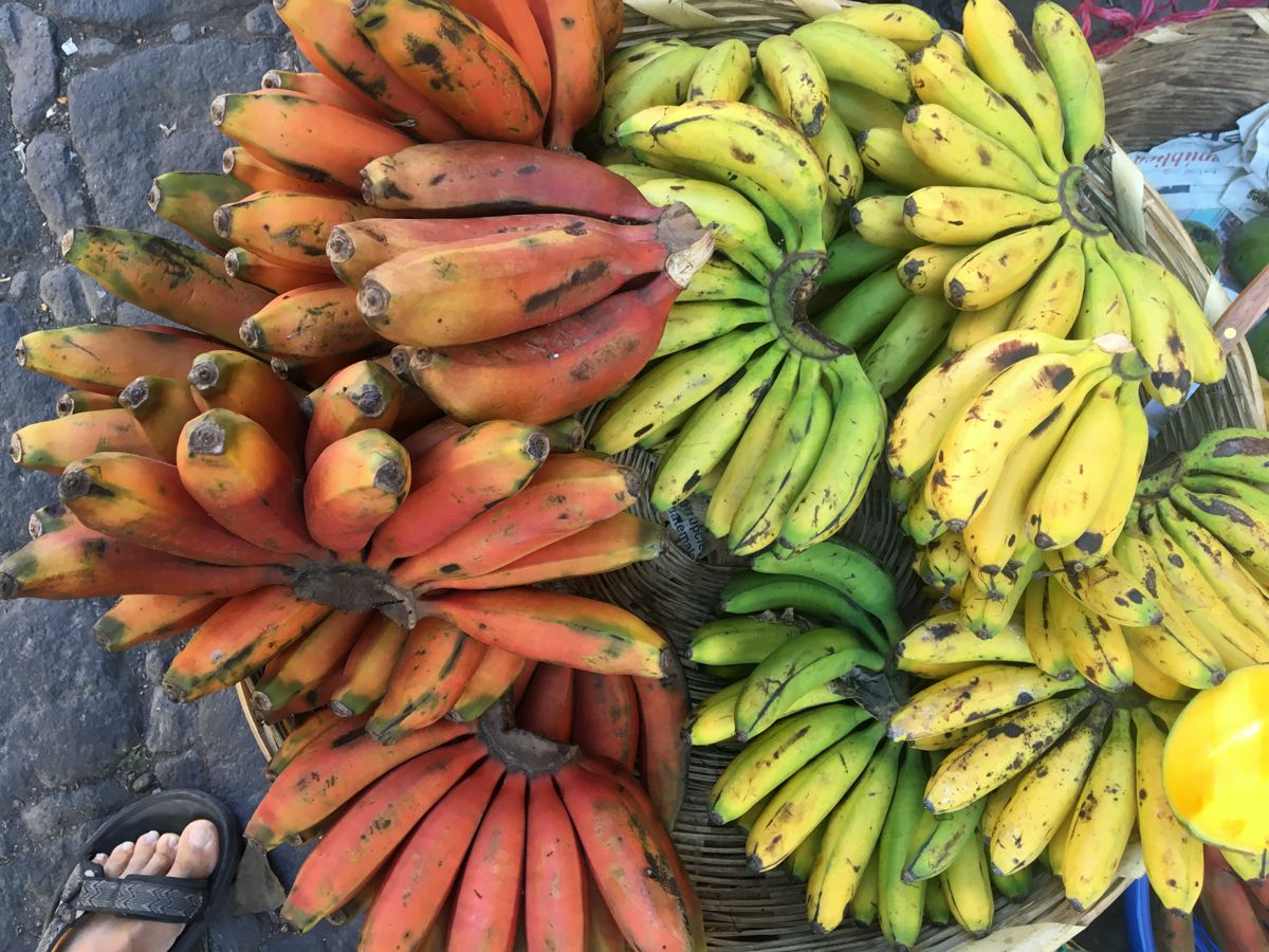 versch. Bananensorten für Maui